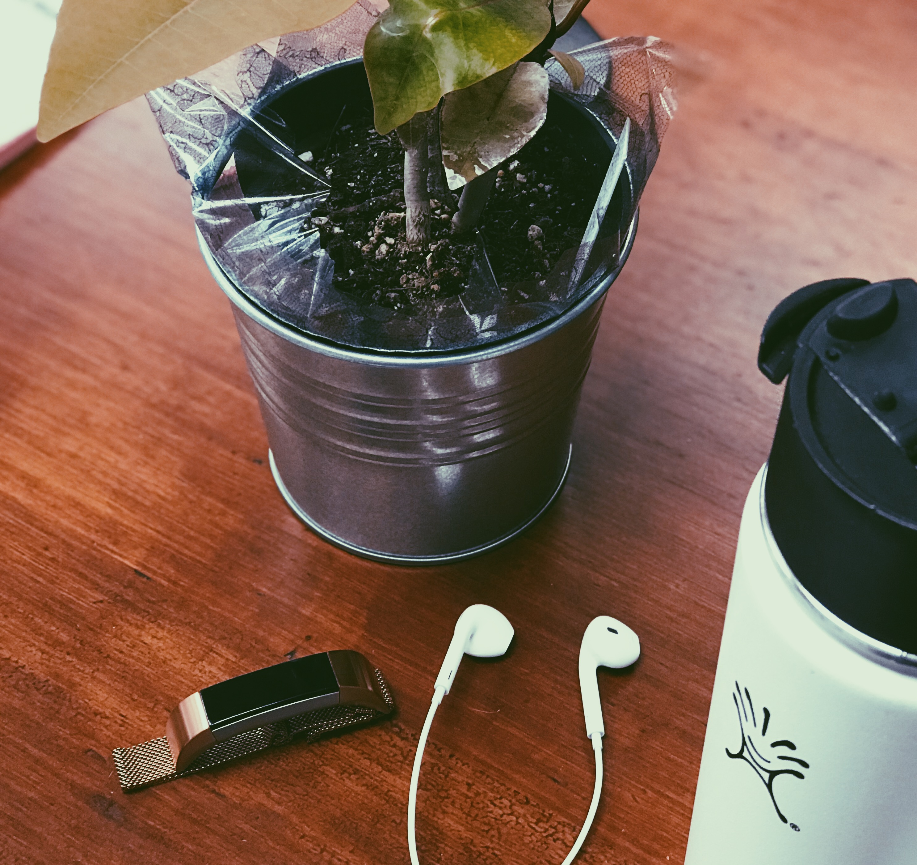 water bottle, headphones, fitbit alta and a plant